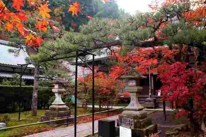 本堂脇の樹齢100年の「縁結びの松」と樹齢300年の百日紅が良く知られていますが、当寺院の素晴らしさは、東山の自然に包まれた境内の景色。本堂の裏手には、紅葉が素晴らしい庭園が広がり、また本堂から古道を上った山中には、古色蒼然とした佇まいの「奥の院」があるので、境内を散策すれば、閑寂な空気と共に、四季折々の豊かな景色を楽しめます。  特に青もみじと紅葉時は素晴らしく、訪れる人が少ないので、南禅院同様に静かな散策を好む人、新鮮な山の空気に触れたい方にお勧めのスポットです。【11月下旬の「最勝院」の本堂前。手前が「縁結びの松」】