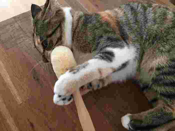 毛質が犬よりやわらかいネコにはシュロよりもソフトなサイザル麻のたわしがおすすめ。