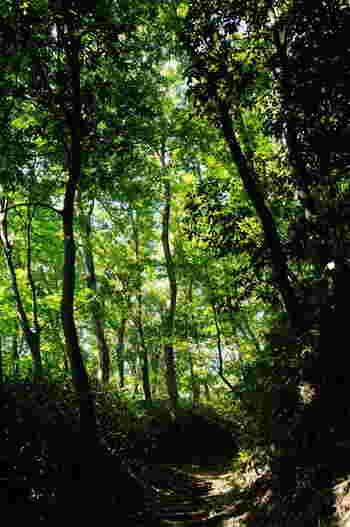 たくさんの木々に囲まれた小道。 まさにメイちゃんがトトロに出会うときに通ったトンネルのようですね。こんな場所が今でも残されていることが驚きです。