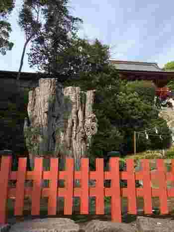 平成22年に倒木してしまった御神木(「大いちょう」)は、残った根から若木がすくすくと生長しており、その生命力みなぎる姿から、パワースポットとしても有名です。