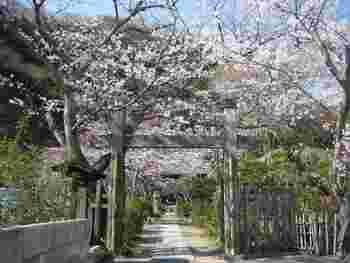 春には門前がこのように華やぐほか、八重桜や萩といった花々も楽しめます。 街中の喧騒を忘れて一息つけるお寺です。