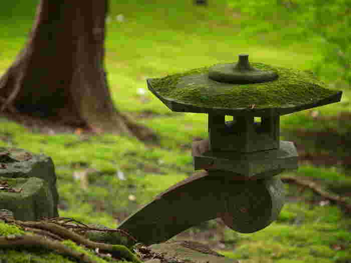 雨に濡れると美しさを増す苔。その苔で有名な6つのお寺を紹介しました。どのお寺も由緒正しく、苔だけでなく他にも見所が多くあるお寺ばかりです。京都に行った折に、訪れてみてはいかがでしょうか。