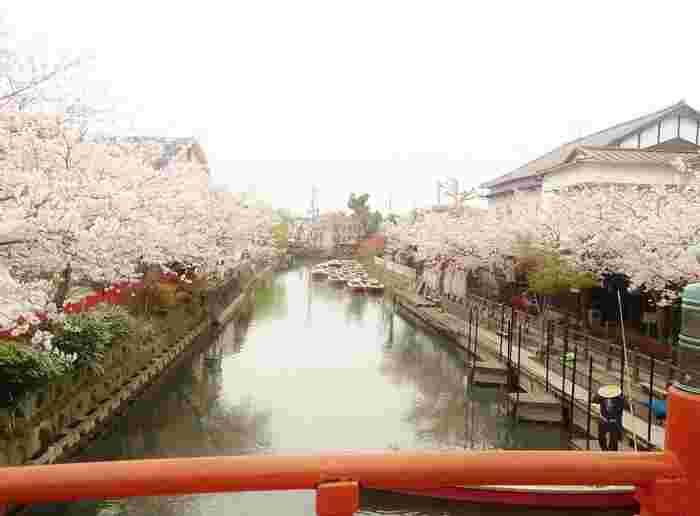 川下りは四季折々の魅力があり、春には川の両脇を桜が華やかに彩りを添えます。