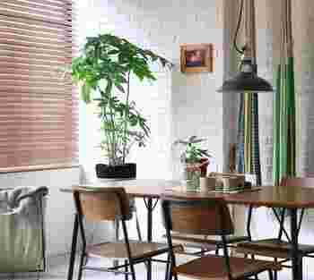 新芽が下からどんどん出てきて成長が早いのも、パキラの特徴です。堂々としたその姿は、家具の横に置くだけで様になります。