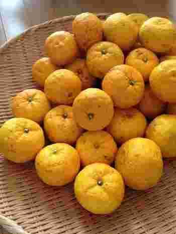 熟した黄色い柚子の皮や果汁は、トッピングや料理・スイーツの香りづけに使ったり、ポン酢やドレッシング、柚子味噌、柚子酢などの調味料にしたり。いろいろ使い分けて楽しみましょう。