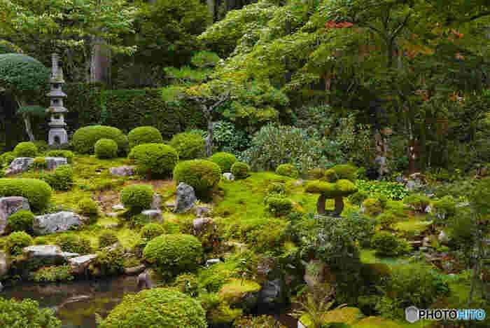 聚碧園は、江戸時代に活躍した茶人、金森宗和が作庭したと伝えられる池泉観賞式庭園の庭園です。鏡のような池、苔に覆われた石燈籠、周囲の樹々が見事に調和し、聚碧園庭園では一幅の掛け軸のような景色が広がっています。