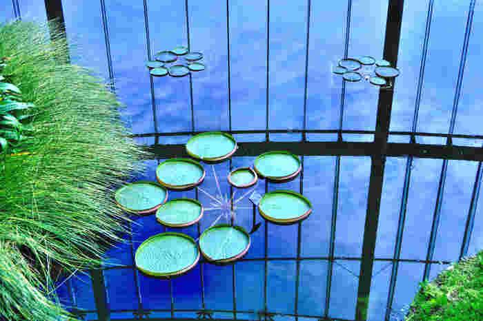 温室内にある池は、人気のフォトスポット。天気が良い日には、水面に青空が映る幻想的な風景を見ることができます。思わず足を止めて、はっと見入ってしまいそうです。
