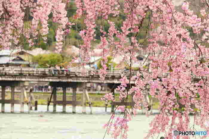 京都を代表する人気観光スポットとなっている嵐山における桜の歴史は古く、平安時代に遡ります。平安時代は、貴族の別荘地として栄えていた嵐山は、「日本さくら名所100選」にも選定されており、随所に景勝地が点在しています。
