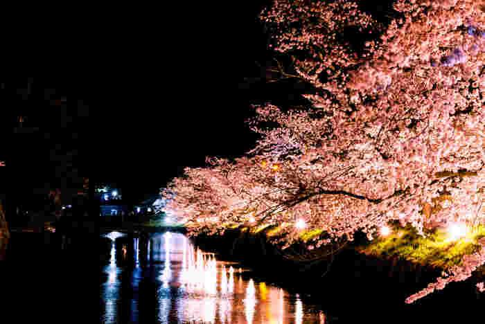 夜にはライトアップされた桜を楽しむこともできます。しっとりと水辺に浮かび上がる桜の姿も美しい。