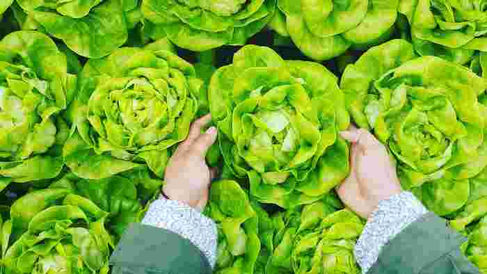 自分で作った野菜を食べることへのあこがれを持つ人は少なくないものの、「農業」を始めるには「広大な敷地を持っていること」「毎日畑仕事ができる時間の余裕があること」が条件だと思い、二の足を踏むことが。ところが、最近はもっと気軽に「野菜作り」を始める人が増えているのです。