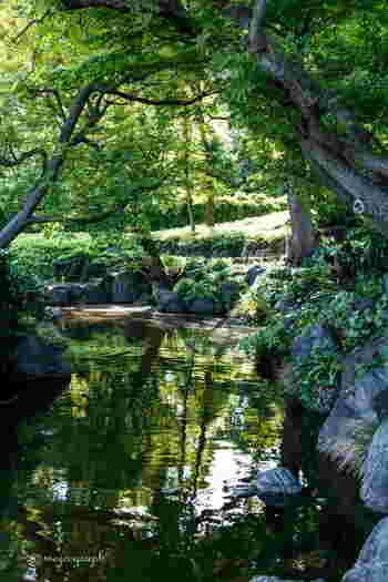 雨上がりの清澄庭園は、緑が色濃く感じられます。野鳥も多いスポットなので、鳥のさえずりに耳を傾けながら庭園をゆっくり歩いてみてはいかがでしょうか?