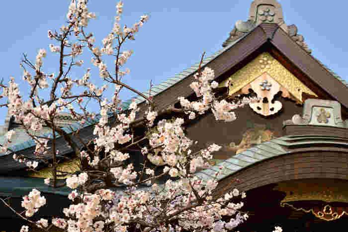 """学問の神様""""菅原道真公""""を祀る関東三天神のひとつである「湯島天神」。湯島駅からすぐのところにあります。このエリアには旧岩崎庭園や上野恩賜公園も近くにあるので、春のお散歩にぴったりです♪"""