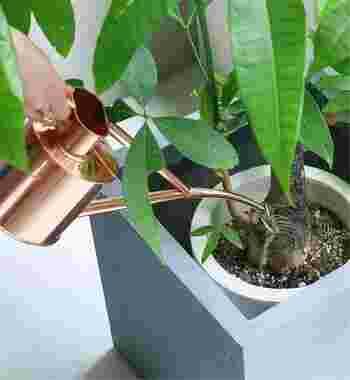 水やりは「土の表面が乾いたら鉢底からあふれるほどたっぷりあげる」が基本です。受け皿に溜まった水は根腐れの原因になるので、必ず捨てましょう。サンスベリアなど葉に水分を蓄えるような植物は乾いてから数日置いから水やりするのがベスト。
