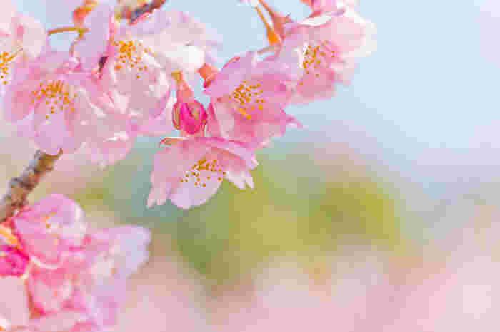 重ねて、畳んでコンパクト!お花見やピクニックに「持ち運び便利」なアイテムはいかが?