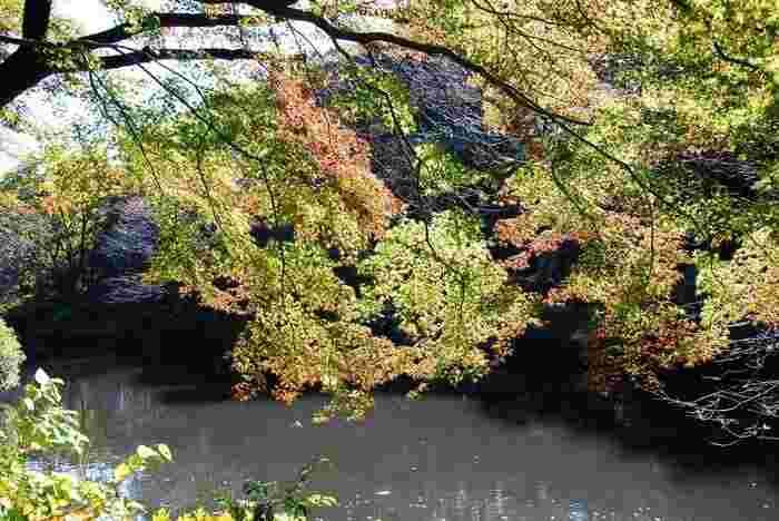 秋は、「紅葉」