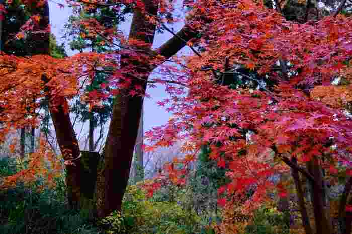 その名の通り、美しいモミジを観賞できるスポットです。山頂から10分ほど先に進んだ所にあります。茶屋で一休みしながら、真っ赤に燃えるモミジを楽しみましょう♪