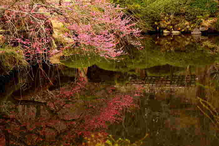 しなやかにカーブした枝に花がたくさんついているさまが、水鏡に映り、華やかさそのもの。