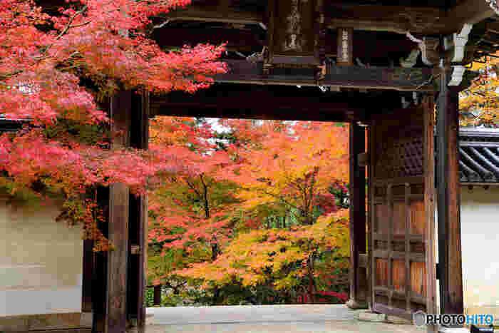 嵯峨野エリアの中でも紅葉の名所として名高い二尊院は、百人一首でも馴染み深い小倉山中腹に建立する天台宗の寺院です。