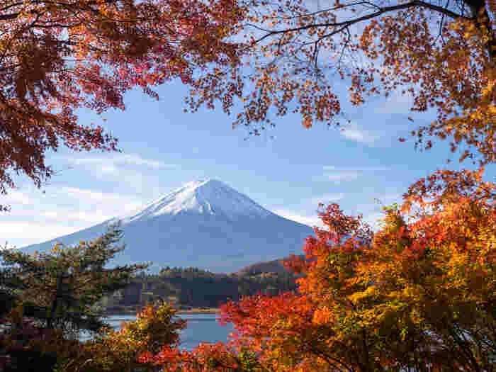 11月の紅葉シーズンには、富士河口湖町河口(ふじかわぐちこまちかわぐち)周辺で「富士河口湖紅葉まつり(ふじかわぐちここうようまつり)」が開催されます。午後10時までライトアップされる「もみじ回廊」は見所です。