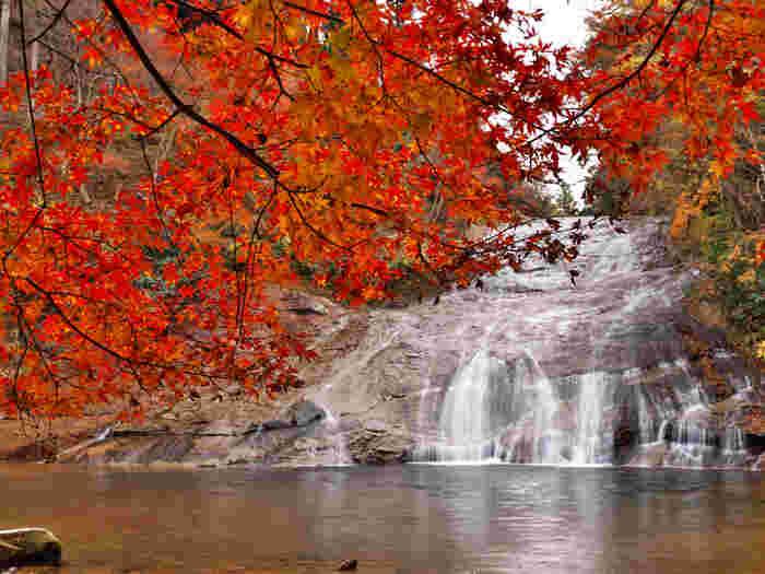 養老渓谷にはいくつかの滝がありますが、その中でも代表的なのが「粟又の滝」です。房総最大級で、落差は約30メートル、幅が約30メートル、全長は100メートルあります。他にも小さな滝が点在しているので、マイナスイオンを浴びながらハイキングを楽しみましょう。