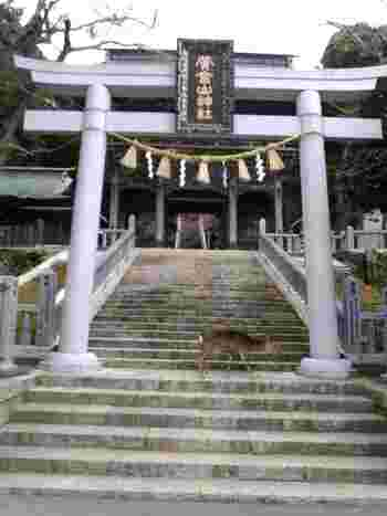 金華山にある黄金山神社は、1200年以上前に創建した歴史があり、神社に宿泊ができるのもここならでは。宿泊すると、翌朝「一番大護摩祈祷」に参列することができます。
