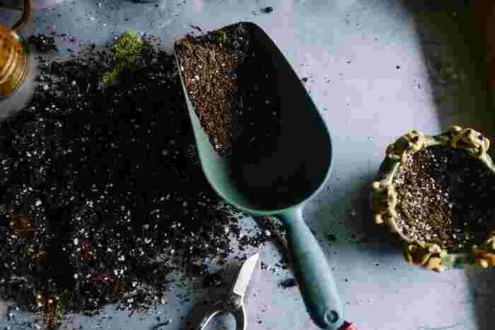 苔玉には、基本的に肥料は必要ありませんが、苔玉に植えた植物の生育には肥料が必要です。与えすぎると根腐れを引き起こす原因になるので、規定よりも2倍以上薄めた液体肥料を1~2週間に1回与えるようにします。濃度の調節が難しいようであれば、肥料をあまり必要としない植物を植えつけるのがおすすめです。