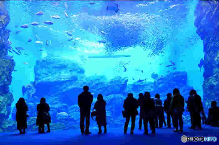 """仙台港のそばにある「仙台うみの杜水族館」は、東日本大震災後に""""復興を象徴する水族館""""としてオープンしました。9,900平方メートルの施設内には約100基の水槽があり、首都圏の水族館に引けを取らないほどの人気。お子さんと一緒に1日めいっぱい遊べますよ。"""