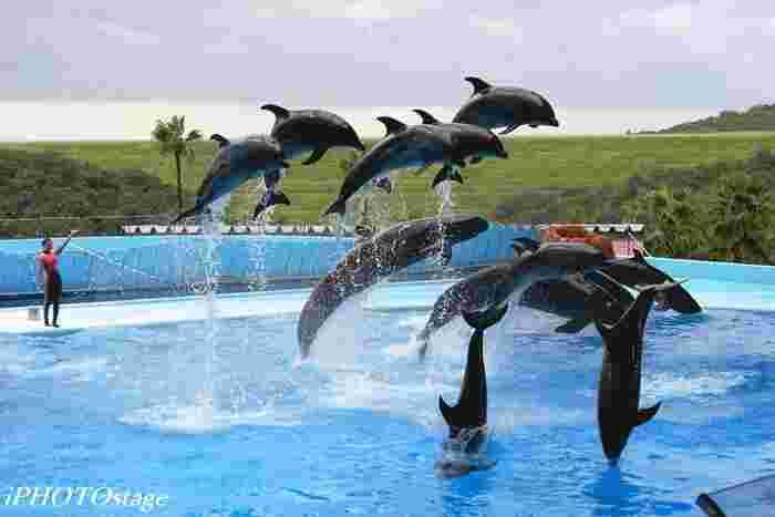 白浜という海に面したリゾート地にあるアドベンチャーワールドでは、イルカをはじめ、様々な海の生き物たちが飼育されています。無料で見学できるマリンライブ(イルカショー)はクオリティが高く、見ごたえ抜群です。