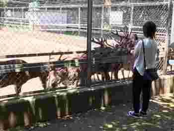 奥参道から少し入ったところにある「鹿園」。鹿島神宮では鹿を「神鹿」として大切にしています。愛らしい瞳の鹿にエサをあげることもできますよ。