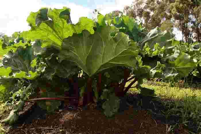 以前ならちょっと値の張るものを「おもたせ」にしたりということもよくありましたが、今では自分で植えた野菜を手みやげにしたり、ご近所さんからお裾分けをいただいたりすることも。無農薬での野菜作りは難しいですが、無農薬であるということはセールスポイントにもなるんです。