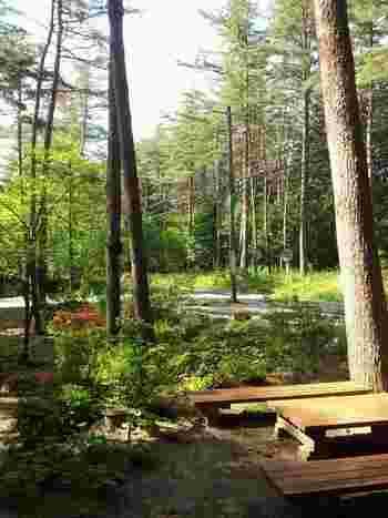 お天気の良い日はテラス席がおすすめ。鳥のさえずりや葉っぱの揺れる音にほっとリラックスできます。
