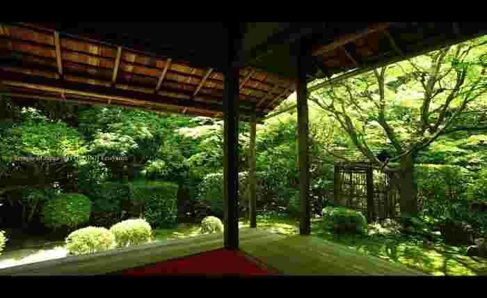こちらは「侘びの庭」。小さな庭ですが、禅から生まれた美意識である侘び寂びを感じることができます。この他にも「清浄の庭」「思惟の庭」「真如の庭」とそれぞれ趣が異なる庭があり、国の史跡・名勝に指定されています。