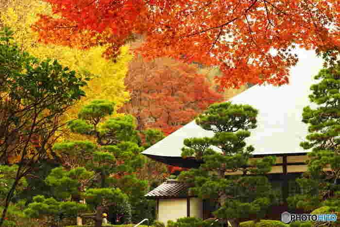 「浄妙寺」は鎌倉駅から徒歩約30分、バスなら「報国寺」と同様にJR鎌倉駅より京急バスに乗り「浄明寺」下車・徒歩約1、2分。四季折々の花や紅葉の美しさも人気のお寺です。「喜泉庵」では、お抹茶を頂きながら枯山水の庭園を眺めることもできます。