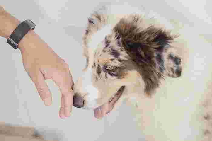 本来は群れで行動する犬は、ひとりでいることが苦手な動物。飼い主と長く離れていると寂しさからストレスがたまり、うつ病になることもあるんだそう。おもちゃを与えてあげたり、疲れ果てるまで思いっきり遊んであげることで、犬の寂しさを埋めてあげて下さい。