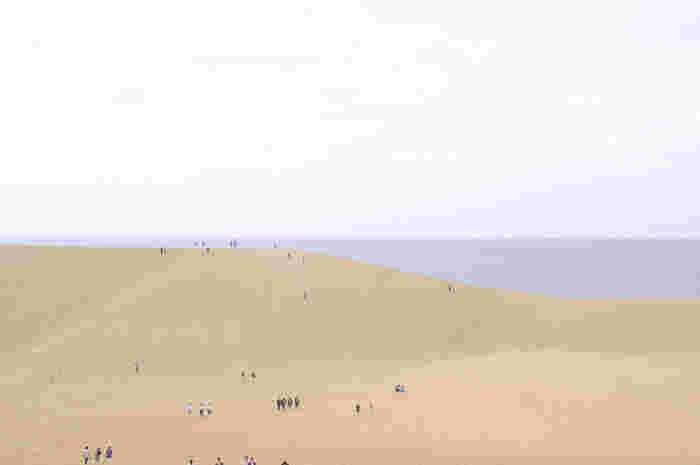 鳥取県といえば、まずはずせないのがこちら。鳥取駅からバスで15分くらいで行ける、鳥取市の「鳥取砂丘」です。そう、駅から徒歩で行けないので、バスに乗らなければならないのですが・・・それもそのはず。「鳥取砂丘」は、海に面しているんです。  そのため、どこからが海の砂浜?どこからが砂丘?とわからなくなりますが、その規模は南北2.4km東西16km。見渡す限り、ほとんどが鳥取砂丘です。