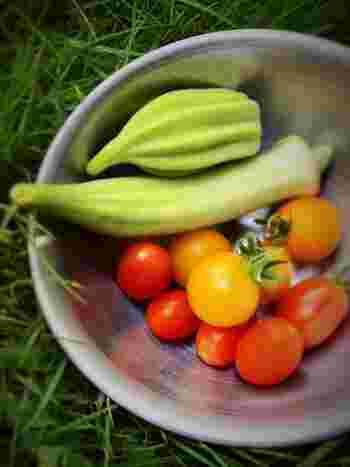 こちらはオクラとミニトマト。自宅でとれた野菜は味も格別に感じるはずです。