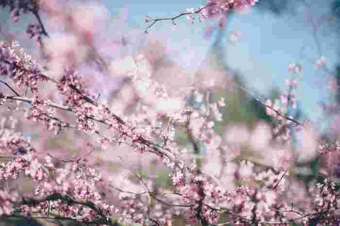 """風にあたたかさを感じる瞬間があったり、ちょっと膨らんだ花のつぼみをみつけたら、何を着ようかな…?重いコートを脱いだら、もうすぐ一年で一番""""花柄""""の似合う季節がやってきます。"""