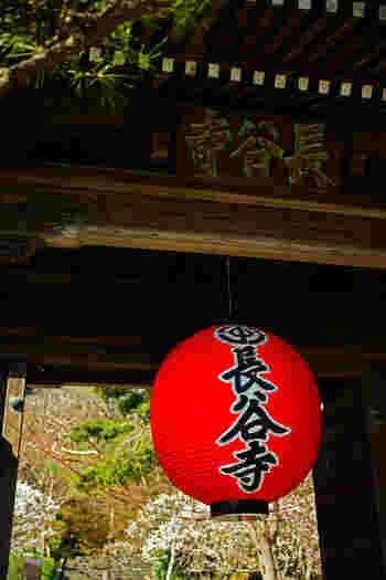 江ノ電沿線にある長谷駅を降りると、「長谷寺」があります。由比ヶ浜を望む長谷寺は、鎌倉有数のあじさいの名所。これからの時期、あじさい目当ての観光客で人気スポットです。