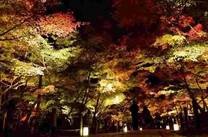 古今集には「もみじの永観堂」と詠われるほど、永観堂(禅林寺)の紅葉の美しさは際立っています。永観堂と紅葉の美しさを一目見るため、いつも大勢の観光客でにぎわっています。