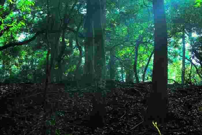 春日大社の聖域の一部とされている春日山原生林は、約250ヘクタールに及ぶ広大な森林です。