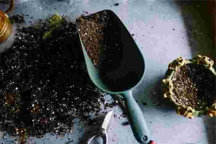 コーヒーかすを乾燥させ、スプーンなどにとり、芽や苗の間に撒きます。肥料や脱臭剤としての効果はそれほど長くはもたないので、1~2週間に一度は表面の土を中の土と混ぜ、さらに新しいものを追加して撒くのがおすすめ。