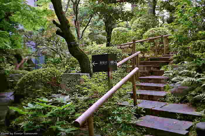 1941年に初代・根津嘉一郎氏の古美術コレクションを保存・展示するため設立された美術館。平成21年10月に、隈研吾氏の設計によりリニューアルオープンしました。館外には約17000平方メートルの日本庭園が広がり、四季折々の情緒あふれる光景を満喫できます。