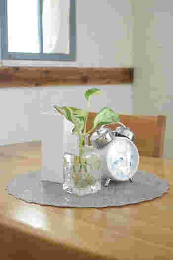 【育て方】ポトスの水栽培は、水栽培用の苗か、水挿しで増やしたもので始めるのがおすすめです。容器に根腐れ防止剤を入れ、ポトスの苗を入れます。安定しない場合は、支持体(ネオコール等)を使用しましょう。水を入れ物の5分の1くらいいれ、日当たりのよい場所で管理。5〜10月の生育期には、水栽培用の肥料を与えると、元気に育ちますよ。 【育て方のコツ】根腐れ防止剤を入れている場合、水やりは水が無くなってからで大丈夫です。水の入れすぎには注意しましょう。夏場の強い日差しに当てると、葉が黄色くなりやすいので、注意してください。また、寒さに弱いため、冬は室内で管理してくださいね。
