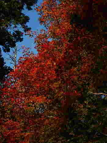 犬鳴山(いぬなきさん)とは、大阪府と和歌山県の県境近く位置する犬鳴川渓谷を中心とする山岳地帯の総称です。比較的低山地帯の山岳景観であるにも拘わらず、犬鳴山は、「大阪府緑の100選」に選定されているほか「金剛生駒紀泉国定公園」にも指定されており、豊かな自然が広がる景勝地として知られています。