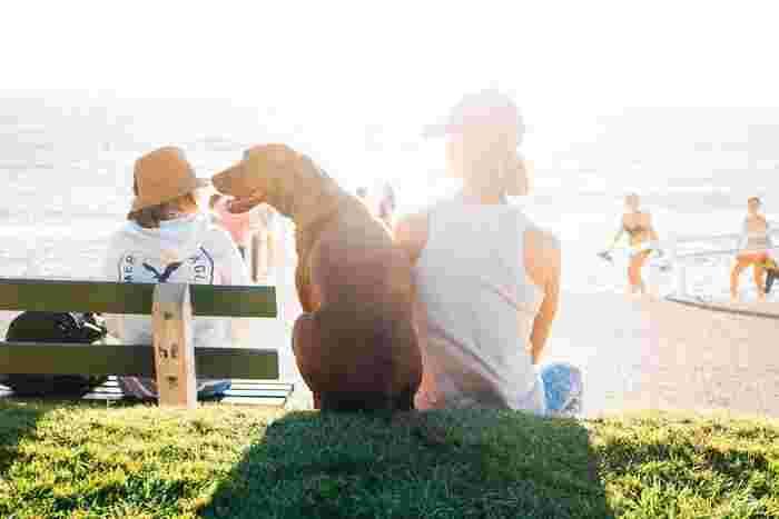 公園や海、山ならば愛犬とのびのび遊ぶことができます。