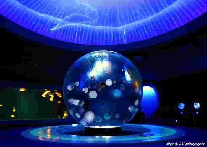 「新江ノ島水族館」は、クラゲの展示に力を入れていることでも有名です。その集大成とも言えるのが、幻想的な「クラゲファンタジーホール」。中央に設置された球型の水槽は、まるで宇宙に浮かぶ星のよう。天井はクラゲの体内をイメージしたドーム型になっており、世界初という3Dプロジェクションマッピングも鑑賞できます。