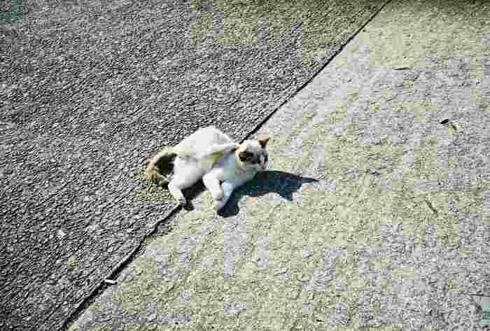自分の影をじっと見つめる猫が可愛らしい一枚です*動物と影も面白い写真が撮れる組み合わせですね♪