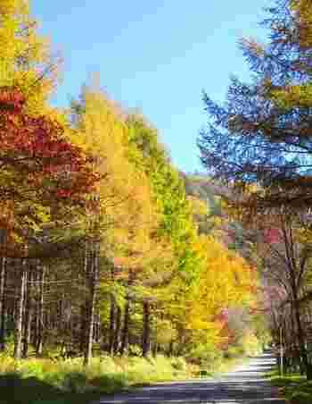 夏のビーナスラインも素敵ですが秋の紅葉シーズンも趣があってとても魅力的。