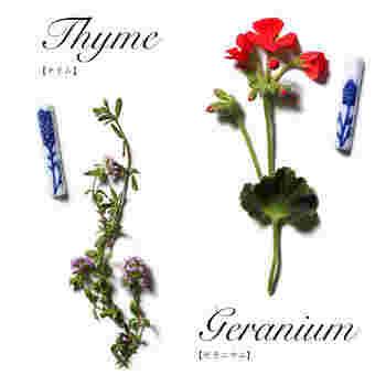 こちらは、ハーブとしておなじみのタイムとゼラニウム。こんなにきれいな花を咲かせるんですね。 小さな面積でたくさんの花が描き分けられていて、思わずため息が出ます。