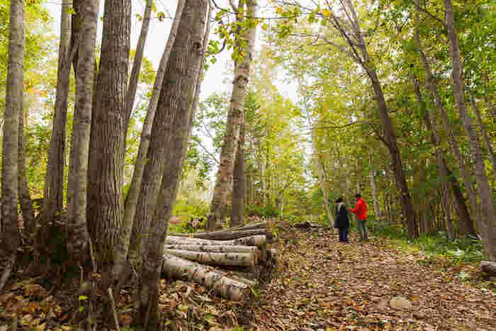 下川町にある「株式会社フプの森」は、森を育てる過程で出る枝葉から抽出するエッセンシャルオイルの商品化と販売を行っています。